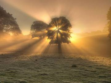 tree-sunburst12